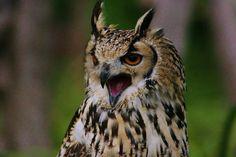 Perching owl. Photo taken by Cynthia Riebesell