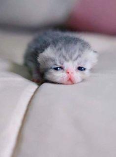 Brand new baby kitten.