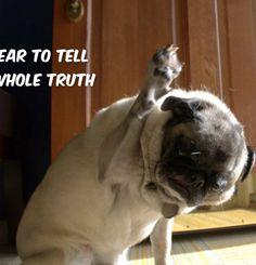 Funny Pug Dog Meme