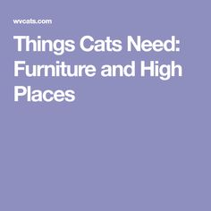 Things Cats Need: Furniture and High Places