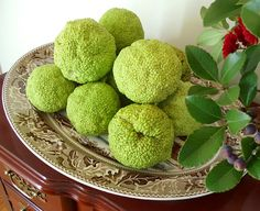 """""""Hedge Apple Fever"""" I never knew what to do with these.  They are in the woods behind the house!  Spiders beware!"""