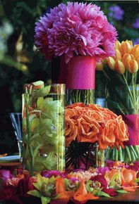hot pink and tangerine flowers
