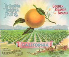 Good Books For Young Souls: Sun-kissed in Riverside, California - Vintage Orange Crate Labels