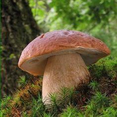 HAJANY - Recepty - Houbový bramborák a další úžasné houbové recepty.....http://www.hajany.com/clanky/recepty/houbovy-bramborak--a-dalsi-uzasne-houbove-recepty.html