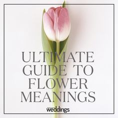Ever wanted to know what your favorite flower means? Here's the ultimate guide Flower Meanings, Flowers And Their Meanings, Wedding Bouquets, Wedding Flowers, Floral Design Classes, Language Of Flowers, Floral Arrangements, Planting Flowers, Beautiful Flowers