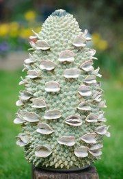 Banksia by Frances Doherty - stoneware Cool Sculpting, Organic Form, Seed Pods, Ceramic Flowers, Natural Forms, Land Art, Sculpture Art, Ceramic Sculptures, Art Fair