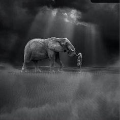 Cloudy w A Few Chances Of Elephants