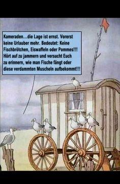 Tierischer Humor, True Words, Haha, Funny Pictures, Jokes, Comics, Birds, Random, Instagram