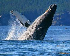 Alaska Whale Watching