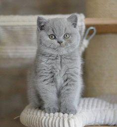 Adorable gatito gris !!!