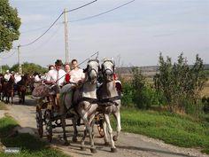 Az Almafa (de appelboom) in Nagykónyi, Tolna-Mecsek huren? Hungary, September, Horses, Holiday, Animals, Vacations, Animales, Animaux, Holidays