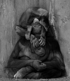 Orangutan fun