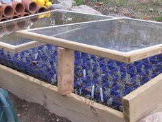 Organic Gardening Ideas Lockwood Lavender Farm: How to Propagate Lavender Lavender Seeds, Growing Lavender, Lavender Blue, Growing Herbs, Lavender Flowers, Lavander, Purple Roses, Growing Flowers, Lavender Crafts