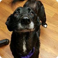 Adopt A Pet :: Abby - Lisbon, OH