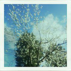 Primavera ad Assisi