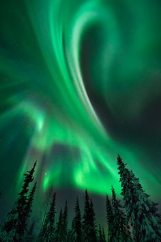 aurora In the Boreal Forest