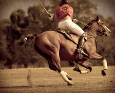 playing polo ~ pure speed.  Football, Hockey, Baseball, don't even come near this sport.