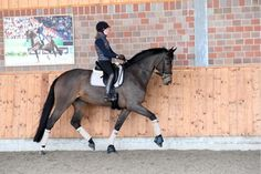 The Swinging Back by Helen Langehanenberg. One of Germany's best riders explains the importance of a supple, submissive horse.