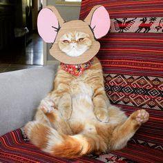 The smarter of the two. ;) #exoticshorthair #cat #cute #flatface #meow #mreggs #catlover #exoticsofinstagram #smushface