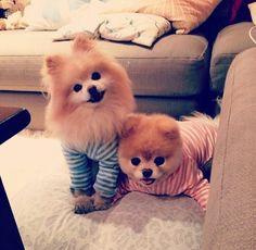 Doggies in pajamas