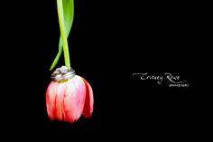 Creative Wedding Ring Shots + Critsey Rowe » Charlotte Wedding ...