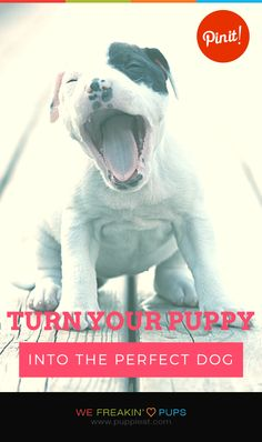 Turn Your Puppy Into The Perfect Dog   #puppies #puppy #pup #dogs #dog #pets #pet #tips #tip #tricks #trick #teach #training #howto #how #ideas #animal