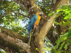 Images from Colombia / Imágenes de Colombia: Birds / Pájaros