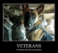 Some Vets are four-legged