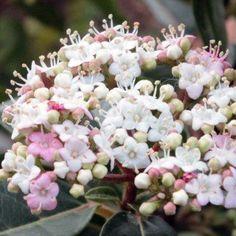 Arbuste d'ombre : 10 variétés indispensables au jardin - Promesse de Fleurs Geranium Vivace, Tin, Bloom, Spirit, Green, Plants, Licence, Moment, Creative