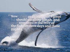 Jonah 2:1 Prophet Jonah, Whale, Night, Movie Posters, Whales, Film Poster, Billboard, Film Posters