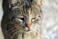 Grumpy stand eines kalten November Tages einfach bei uns am Hof – besser gesagt, die bezog den Stadl. Im Schlepptau hatte sie ein ziemlich kleines, rot-weißes Kätzchen, offensichtlich ihres. …