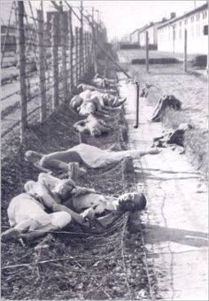 Mauthausen dead prisoners lying along the barbed wire World War Two Indira Ghandi, Horrible Histories, Lest We Forget, Persecution, World History, World War Two, Wwii, Never Again, Germany