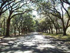 Reminds me of home in Savannah... We drove on roads like this everyday :) ahhhhh the good ole days