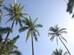 Palme dei Giardini Villaggi Flor de Pacifico
