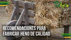 Recomendaciones  para Fabricar Heno de Calidad - TvAgro por Juan Gonzalo...