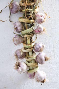 Pastel | Pastello | 淡色の | пастельный | Color | Texture | Pattern | Composition | Garlic