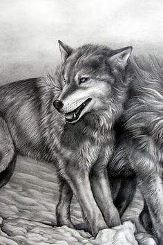 Tattoo Designs: Wolf tattoo flash first part Bear Tattoos, Wolf Tattoos, Feather Tattoos, Animal Tattoos, Free Tattoo Designs, Wolf Images, Gorgeous Tattoos, I Tattoo, Tattoo Flash