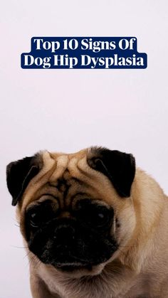 Dog Health Care, Dog Health Tips, Big Dogs, Small Dogs, Dog Leg, Hip Dysplasia, Thigh Muscles, Dog Crate, Pug Life