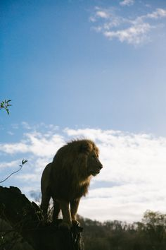 Lions, Tigers & Bears, Oh My! - The Londoner