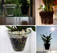 ariants like the clear-plastic, see-through pots made by designers like Josep Armengol.
