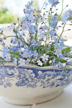 I have always loved forget me knots - they used to grow like weeds in my backyard but disappeared about 2 years ago...I must by seeds and plant the next spring at my new house.