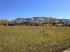 Fall colors on the Steamboat Springs ski mountain!