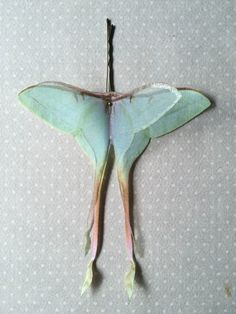 Soft - Handmade Actias Dubernardi Female (Luna Moth Chinese) Hair Bobby Pin in Cotton and Silk Organza - 1 piece by TheButterfliesShop on Etsy
