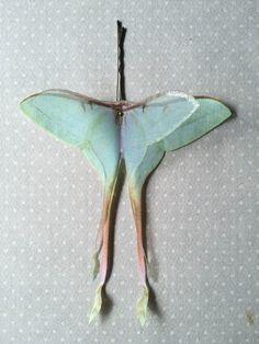 Soft - Handmade Actias Dubernardi Female (Luna Moth Chinese) Hair Bobby Pin in Cotton and Silk Organza - 1 piece by TheButterfliesShop on Etsy