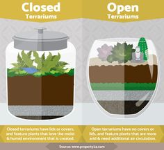Terrariums: Closed or Open Top