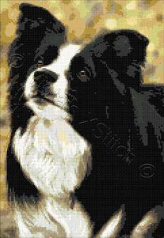 Border Collie No5 cross stitch | Yiotas XStitch