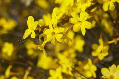 Bunte Pflanzen im Winter: Die 10 schönsten Arten für Ihren Garten - Plantura