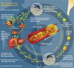 New hope in fight against malaria