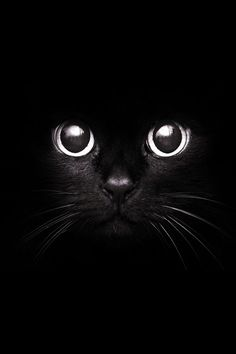 Cute cats black kitty, cute black cats, black cat art, cute cats, i love . Cool Cats, I Love Cats, Beautiful Cats, Animals Beautiful, Cute Animals, Black Animals, Crazy Cat Lady, Crazy Cats, Gatos Cool