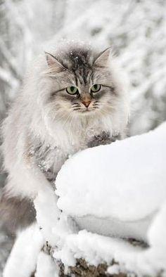 White , from Iryna
